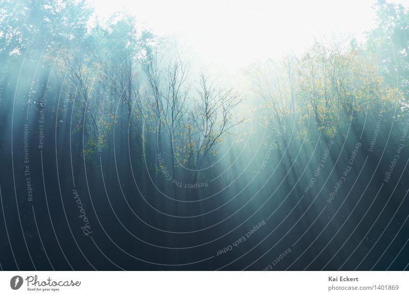 Herbstnebel Natur Landschaft Tier Nebel Baum Wald dunkel kalt natürlich blau gelb gold türkis träumen Traurigkeit Einsamkeit Angst Schüchternheit