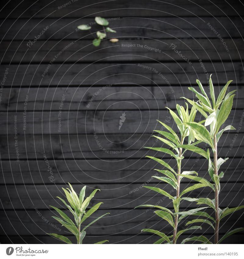 Abgrenzung Natur grün Pflanze Einsamkeit Leben Wand Holz Mauer braun Kraft Hoffnung Trauer Wachstum trist Verzweiflung Halm