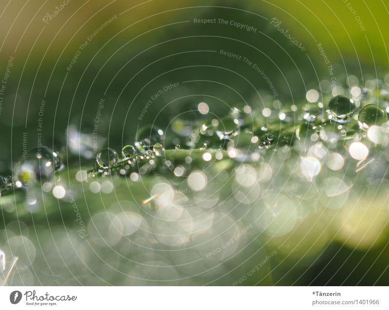 Tropfen Natur Pflanze Wassertropfen Sommer Herbst Regen Blume Blatt ästhetisch frisch nass natürlich schön grün Tau Farbfoto Gedeckte Farben Außenaufnahme