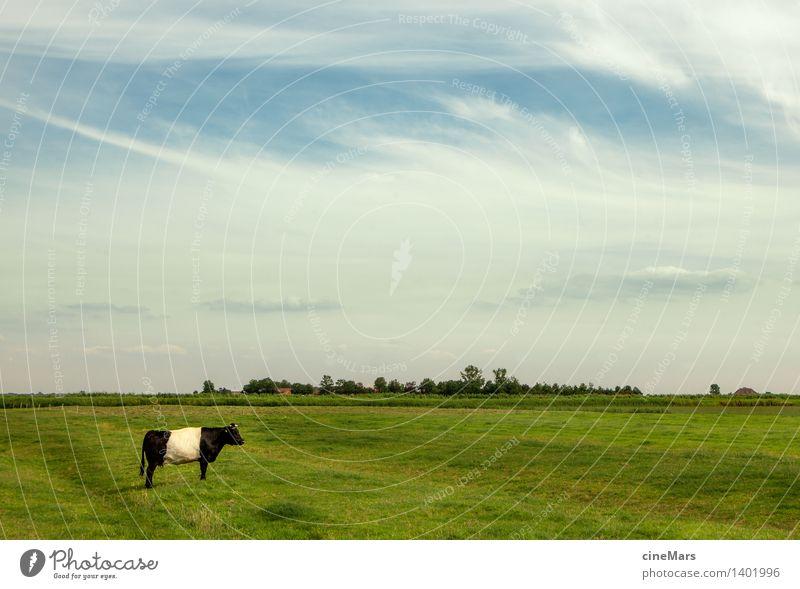 einsam individuell Landschaft Himmel Wolken Sommer Schönes Wetter Gras Wiese Nutztier Kuh Ochse 1 Tier Blühend Denken Fressen füttern genießen stehen träumen