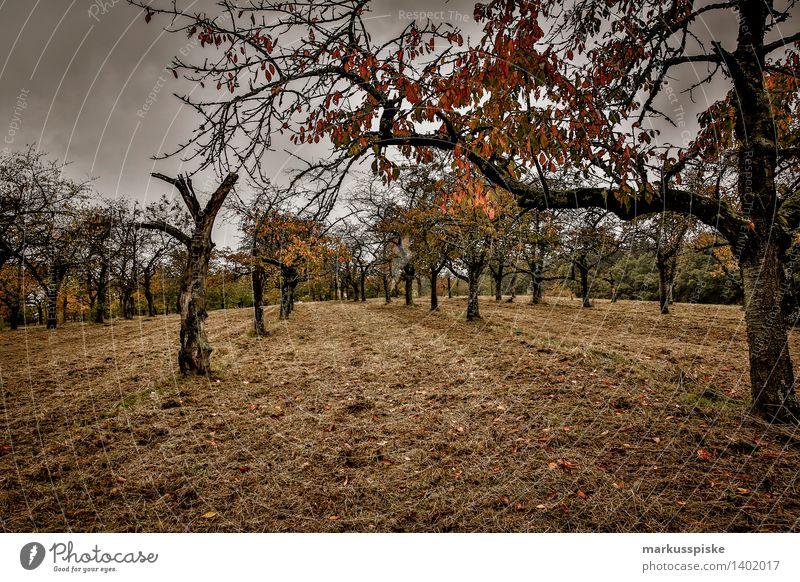 bio obstplantage fränkische schweiz Natur Ferien & Urlaub & Reisen Pflanze Baum Gesunde Ernährung Freude Leben Herbst Wiese Gesundheit Garten Lifestyle