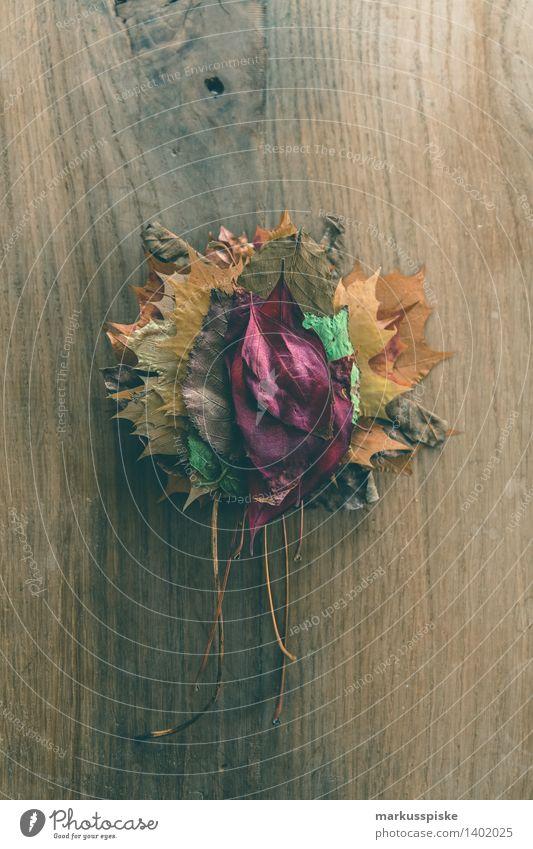 herbstlaub farbig Kind Natur Ferien & Urlaub & Reisen Pflanze Baum Blatt Haus Freude Umwelt Herbst Spielen Glück Garten Lifestyle Freizeit & Hobby Tourismus