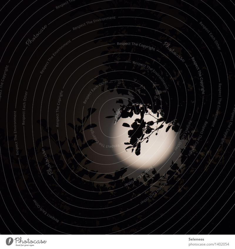 Moon Nachtleben Umwelt Natur Himmel Nachthimmel Mond Vollmond Baum Garten dunkel Licht Schatten Kontrast Silhouette Lichterscheinung