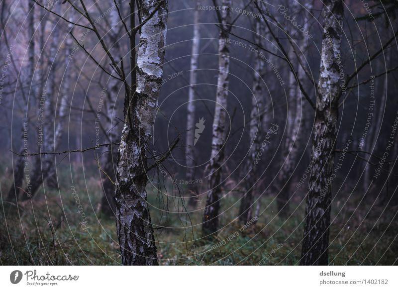 wald. Natur Pflanze blau grün weiß Baum Einsamkeit Landschaft ruhig dunkel Wald schwarz kalt Umwelt Traurigkeit Herbst