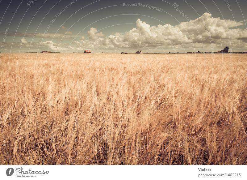 Hauch von Sommer Getreide Feld Wolken Korn Agra