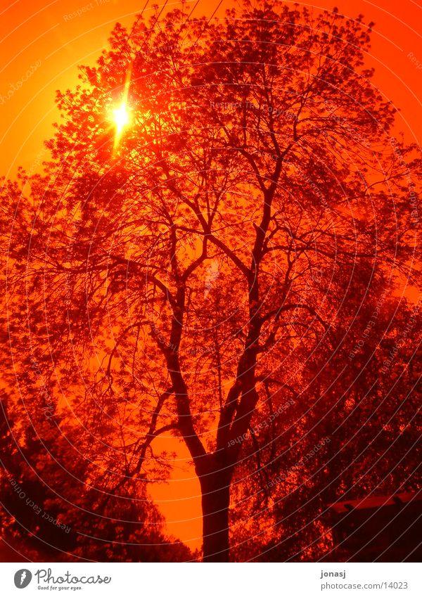 Sonnenuntergang Natur Himmel Baum rot Sommer Ast Geäst Filter