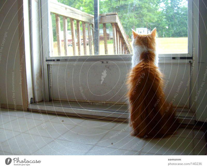 grün Farbe Gefühle Katze orange Physik verträumt Tagtraum
