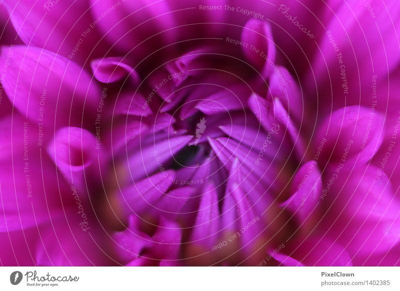 Blüte Kosmetik Parfum Wellness harmonisch Wohlgefühl Erholung Meditation Pflanze Blume Blatt Garten Park Blumenstrauß Blühend Wachstum schön violett Gefühle