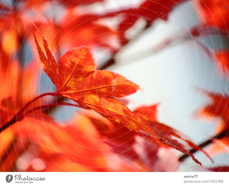 Herbstdesign Natur blau Baum Erholung rot Blatt ruhig Tier gelb Wärme Glück Stimmung orange Park Design