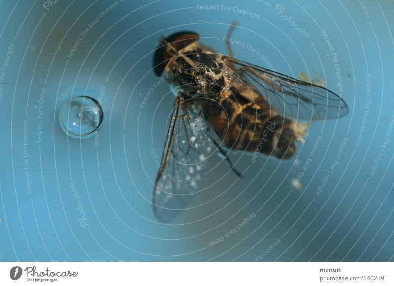 vorbei blau Wasser Tod Traurigkeit dreckig nass Trauer Reinigen Vergänglichkeit Schwimmbad Ende türkis Unfall vergangen Luftblase Stechmücke
