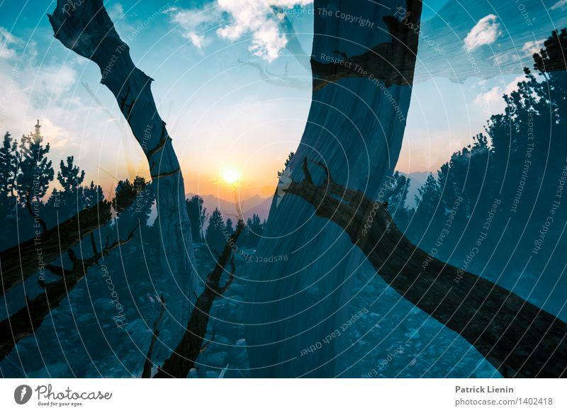 Eye in the Sky Himmel Natur Ferien & Urlaub & Reisen Pflanze Baum Erholung Landschaft Wolken Ferne Wald Berge u. Gebirge Umwelt Freiheit Tourismus Zufriedenheit