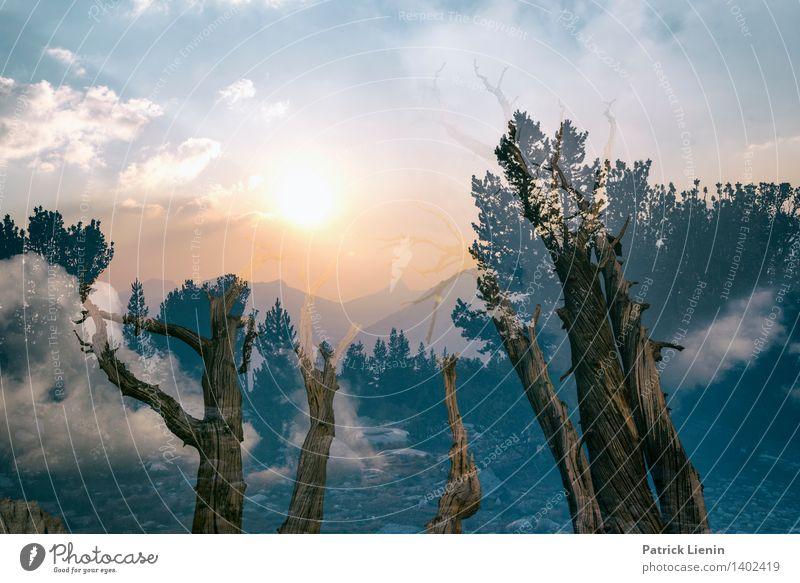 I Remember harmonisch Wohlgefühl Zufriedenheit Sinnesorgane Erholung ruhig Ferien & Urlaub & Reisen Tourismus Ausflug Abenteuer Ferne Freiheit Umwelt Natur