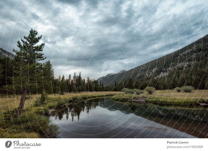 Tuolumne Meadows Tourismus Ausflug Abenteuer Ferne Freiheit Umwelt Natur Landschaft Himmel Wolken Sommer Klima Wetter Pflanze Baum Wald Urwald Hügel Felsen