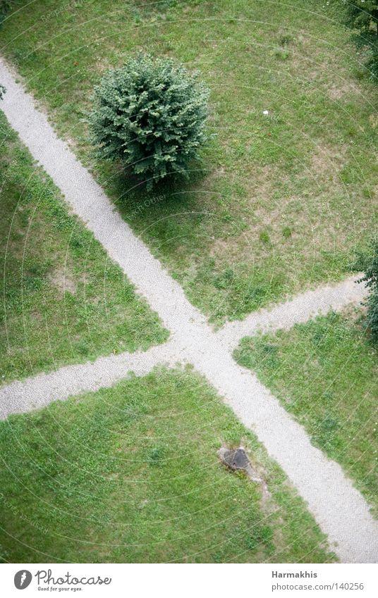 Mach's Kreuzchen Gras Wiese grün trocken Wege & Pfade steinig gekreuzt Wegkreuzung Baum Blatt Waldlichtung Sträucher Baumstumpf Fragen Bedeutung