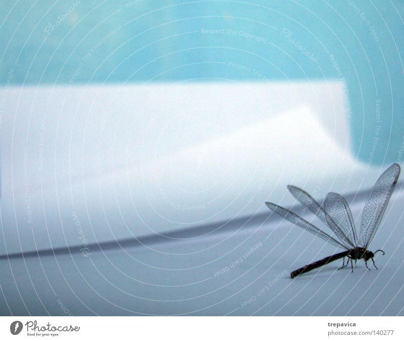 gedicht Papier weiß Tier Insekt leicht fein filigran Libelle blau Flügel Natur Inspiration Fluginsekt Textfreiraum oben Textfreiraum links