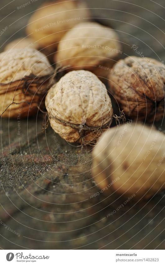 frische nüsse Lebensmittel Frucht Nuss Umwelt Natur Herbst Pflanze Nutzpflanze Nussschale nußbraun Metall authentisch einfach Gesundheit klein nah natürlich