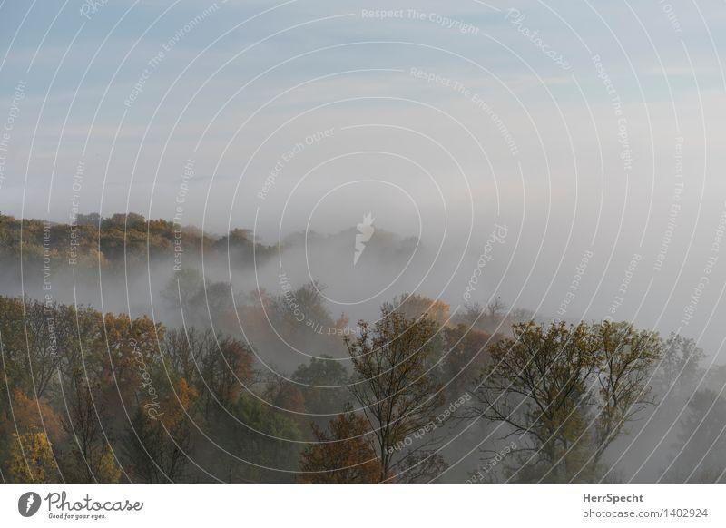 Oktobermorgen Natur Landschaft Herbst Nebel Baum Wald Wien Wienerwald Stadtrand ästhetisch natürlich schön Wiener Wald Nebelschleier Nebelwald Nebelstimmung