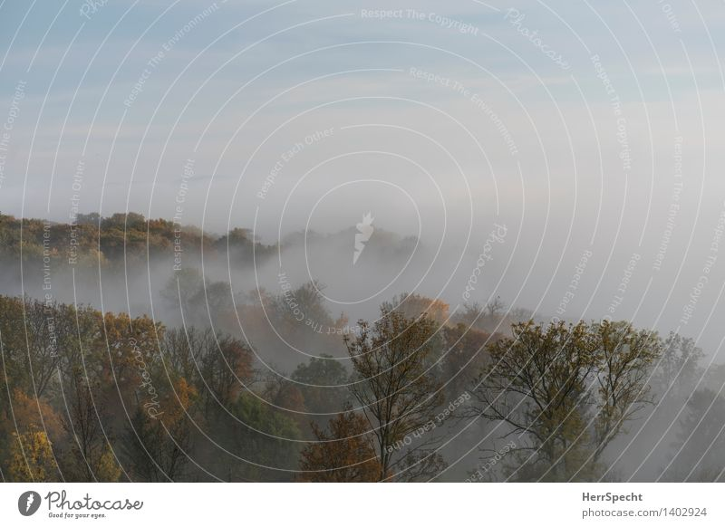 Oktobermorgen Natur schön Baum Landschaft Wald Herbst natürlich Nebel ästhetisch Wien Herbstfärbung Stadtrand Herbstwald Nebelschleier Nebelwald Herbstlandschaft