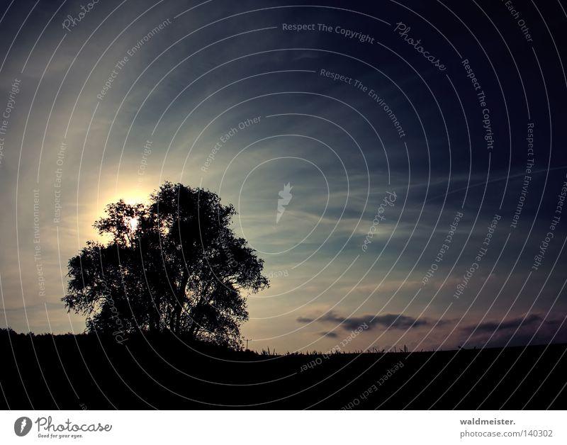 Abendstimmung Himmel Baum Sonne Wolken Abenddämmerung