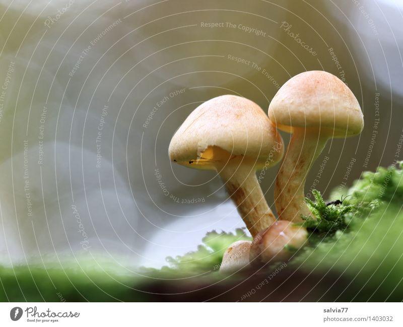 Zusammenhalt Natur Pflanze grün ruhig Tier Wald Umwelt Herbst natürlich Religion & Glaube klein grau braun Stimmung hell Wachstum