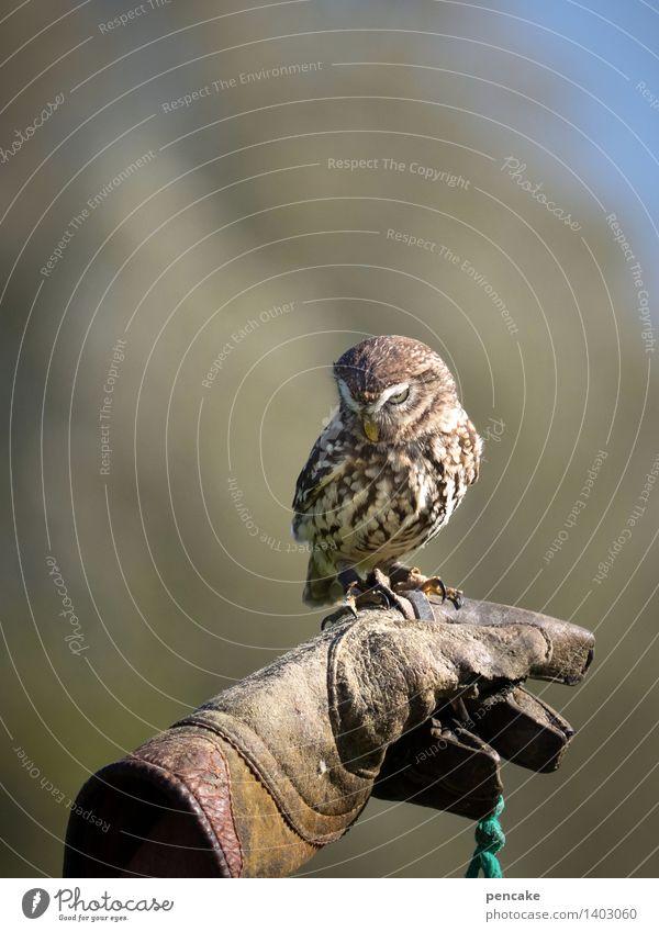 kleinkaliber III Natur Himmel Park Wald Tier Wildtier Vogel Zoo außergewöhnlich