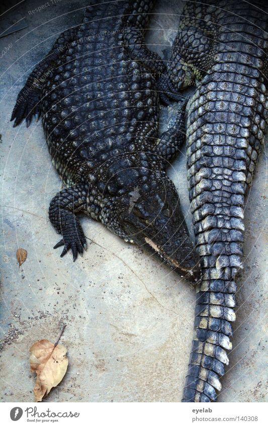 Schmusende Handtaschen Blatt Tier Erholung Fuß Schuhe Kunst warten Tierpaar Haut Beton schlafen paarweise gefährlich Bodenbelag bedrohlich liegen