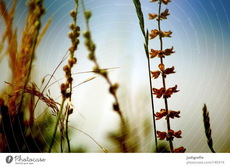 Wiese Natur Himmel Pflanze Sommer Farbe Gras Wärme Umwelt Wachstum Physik zart fein Ähren gedeihen