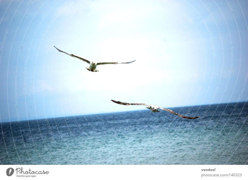 schräge Vögel Möwe Karibisches Meer Freiheit Wasser Vogel Befreiung Segeln fliegen Schönes Wetter Horizont Himmel Tiefflug Urlaub Neigung