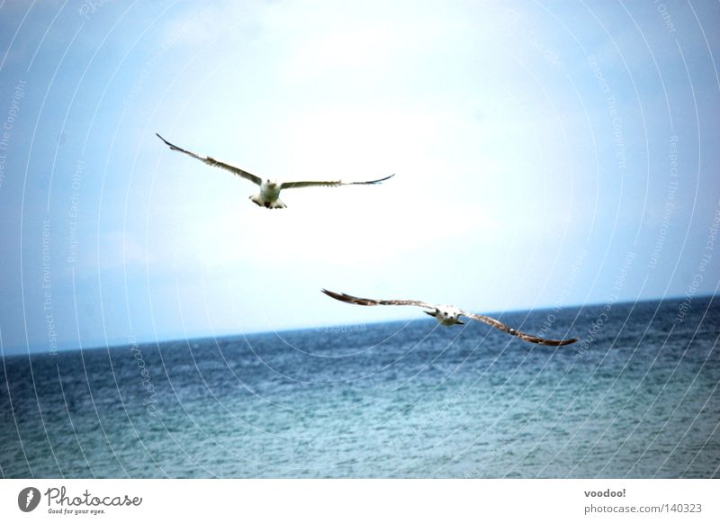 schräge Vögel Wasser Himmel Meer Freiheit Vogel fliegen Horizont Segeln Schönes Wetter Möwe Karibisches Meer Befreiung