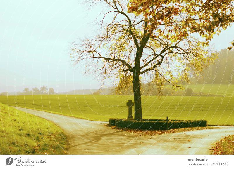 traum | tag im herbst Umwelt Natur Landschaft Pflanze Urelemente Erde Wolkenloser Himmel Horizont Sonne Herbst Klima Wetter Schönes Wetter Nebel Baum Gras