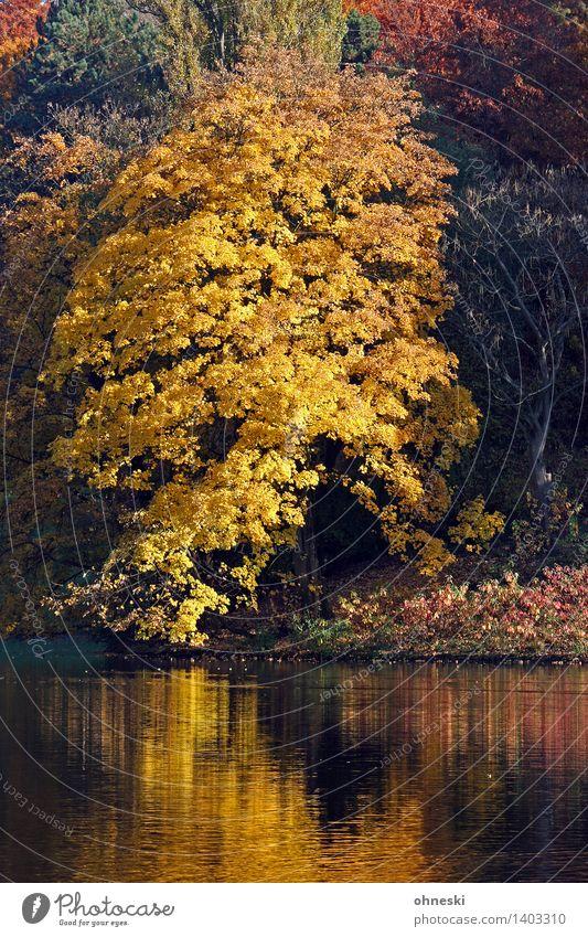 Ruhrpott-Herbst Landschaft Schönes Wetter Baum Blatt Park Seeufer natürlich gelb gold Vertrauen Warmherzigkeit Mitgefühl trösten ruhig Idylle Zeit Farbfoto