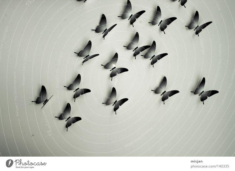 H08 - Flugungeheuer Natur blau schön Tier Farbe Wand Freiheit grau Luft Kunst fliegen frei mehrere ästhetisch Papier Flügel