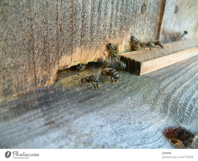 Bienen am Werk Holz Verkehr Biene Hütte Honig fleißig Schwarm