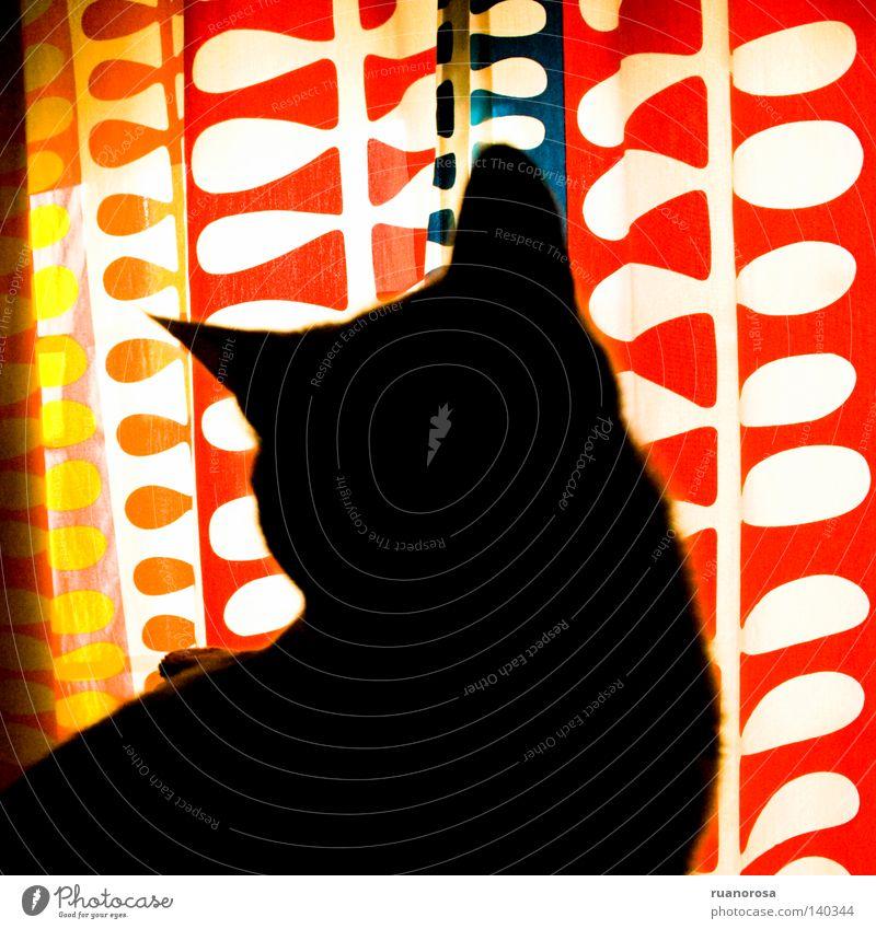 CMYKat blau rot ruhig Haus schwarz Tier gelb Katze rosa Ohr Frieden Handwerk tierisch Erfrischung heiter