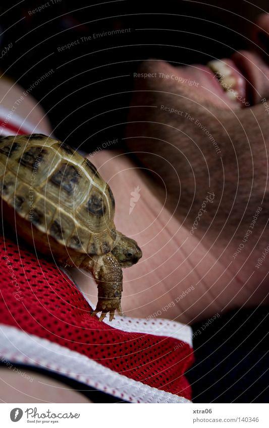 das lachen Mann Tier Geschwindigkeit Haustier krabbeln Schildkröte Amphibie