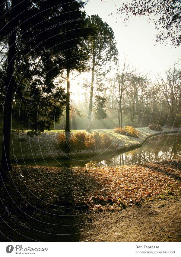 Herbstzeitblätter Jahreszeiten Wald Park Sonne Sonnenstrahlen See Teich Blatt Baum braun welk Morgen Oktober September November kalt Wassertropfen Tau Nebel