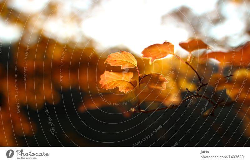 goldener herbst Natur Pflanze Herbst Schönes Wetter Baum Blatt Garten Park Wald ästhetisch elegant hell schön natürlich Gelassenheit ruhig Hoffnung Farbfoto