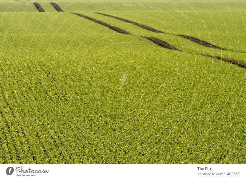 Ländlicher Highway Getreide Landwirt Landwirtschaft Forstwirtschaft Umwelt Natur Landschaft Pflanze Frühling Schönes Wetter Grünpflanze Nutzpflanze Roggen