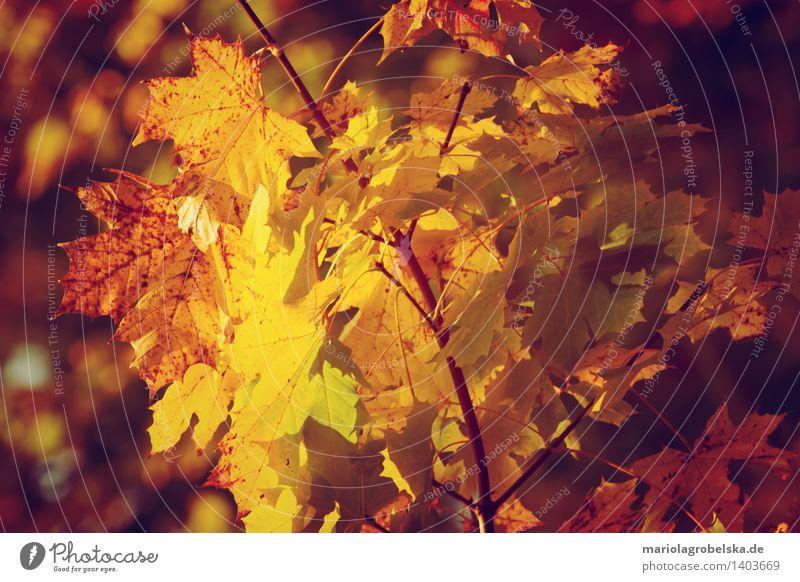 Herbstfarben Natur Landschaft Baum Herbstwald herbstlich Herbstbeginn Herbstlaub Herbstfärbung Herbstwetter Herbstlandschaft gelb orange-rot Laubbaum Blatt