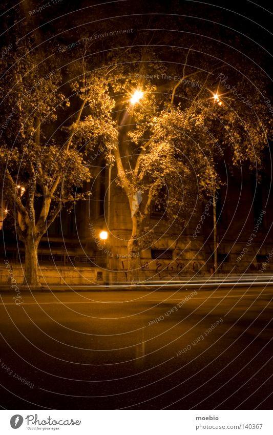 Baum Bildung Argentinien Loggia Buenos Aires Thorarolle