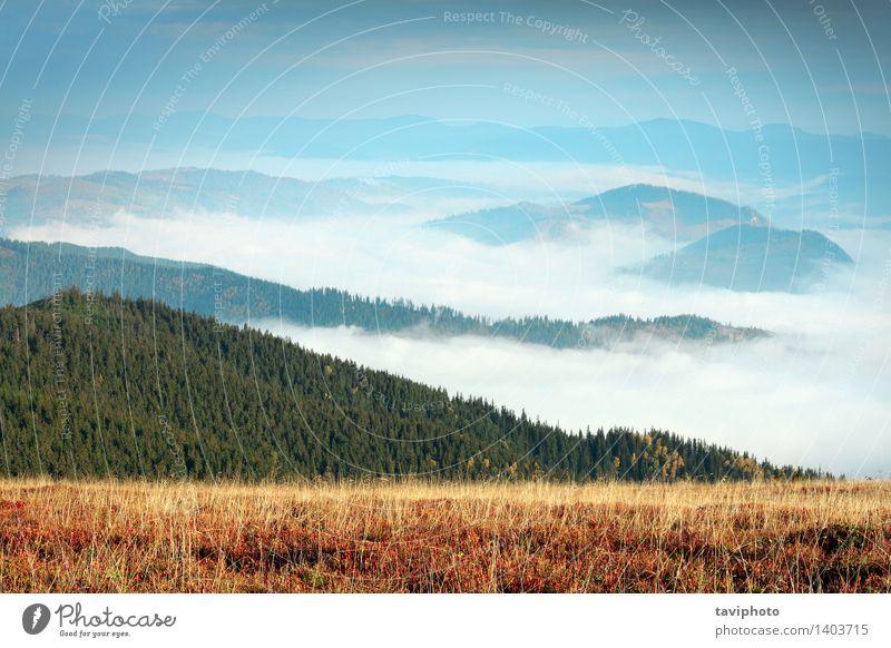 nebeliger Morgen in Giumalau-Bergen Himmel Natur Ferien & Urlaub & Reisen grün schön Landschaft Blatt Wolken dunkel Wald Berge u. Gebirge Umwelt Herbst