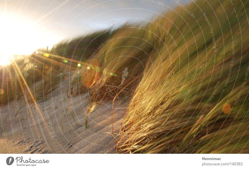 Windlicht Niederlande Düne Stranddüne Sonne Sonnenuntergang Abend Abenddämmerung Licht Gegenlicht hell Sommer Sand Gras Unschärfe Halm Sträucher