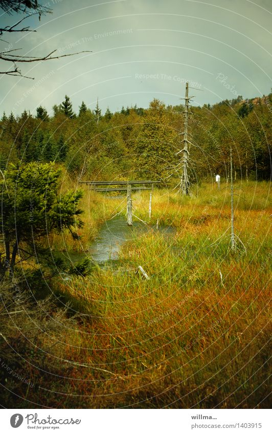 ritter kahlbutz, versumpft Natur Landschaft Teich Wildnis Sumpf Moor unberührt Naturschutzgebiet Landschaftsformen Feuchtgebiete Erzgebirge urwüchsig Naturwuchs Hochmoor