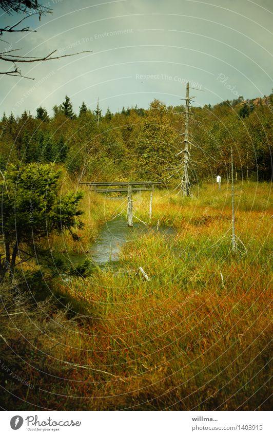 Sumpfiges Gebiet im Hoochmoor Moor Hochmoor Georgenfelder Hochmoor Zinnwald Natur Landschaft Landschaftsformen Erzgebirge Naturschutzgebiet Wildnis Naturwuchs