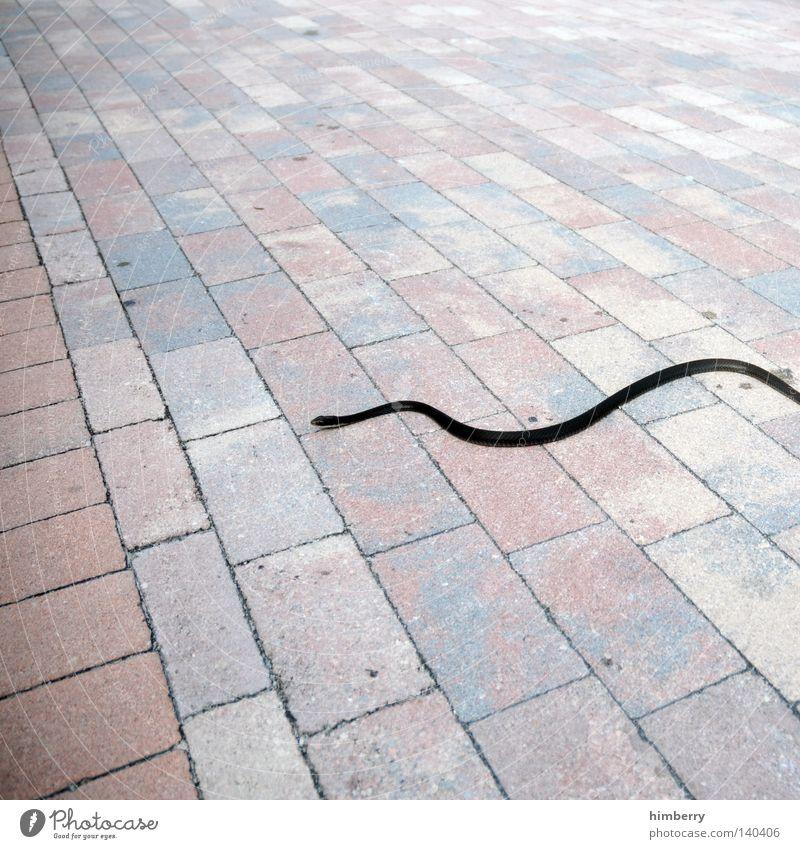 snake preview Tier Stil Linie Angst Hintergrundbild Perspektive gefährlich Boden Spaziergang Bodenbelag bedrohlich Asphalt wild Wildtier Kopfsteinpflaster Panik