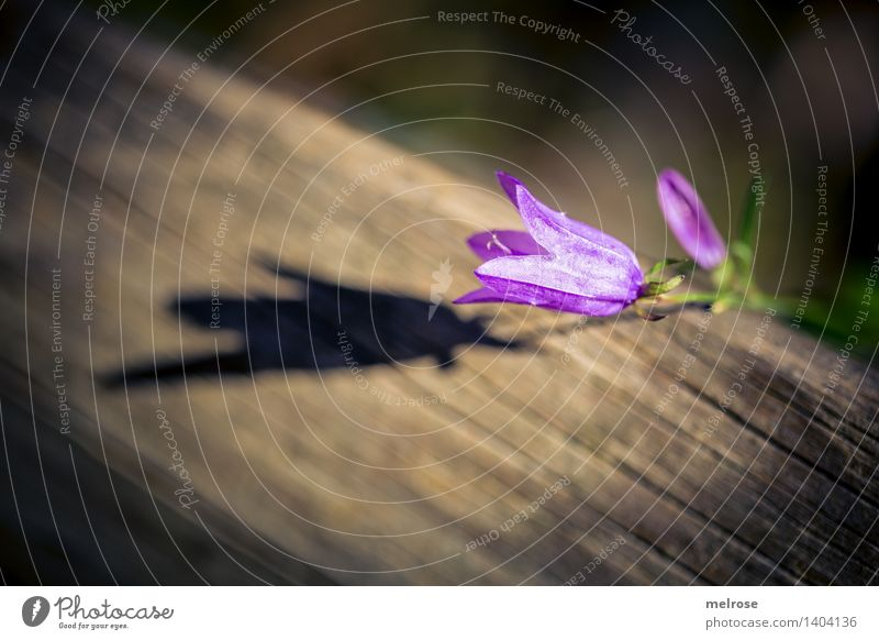 SCHATTENspiel Natur Pflanze schön Blume Erholung Wald Blüte Herbst natürlich Stil Holz braun Stimmung leuchten Blühend einfach