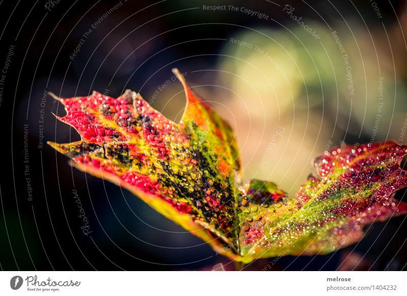 Herbstwassertröpfchen Natur Wassertropfen Schönes Wetter Blüte mehrfarbig Feld Bokeh Unschärfe Lichtschein glänzend leuchten dunkel einfach elegant schön nah