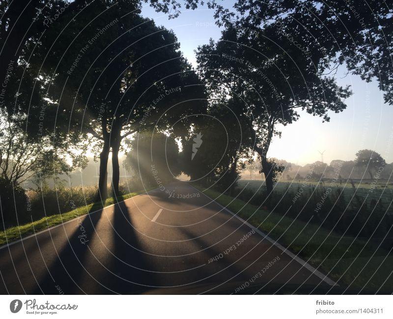 Herbstmorgen Himmel Natur Pflanze blau grün Sommer weiß Sonne Baum Landschaft schwarz Straße Wiese Gras Glück