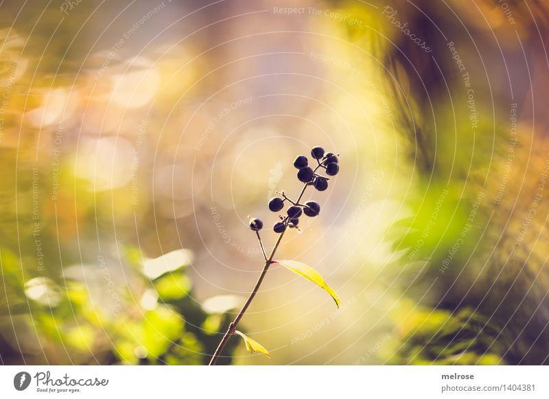 Beerenbokeh Natur Pflanze grün schön Blatt Wald schwarz Umwelt gelb Herbst natürlich Stil Stimmung glänzend träumen leuchten