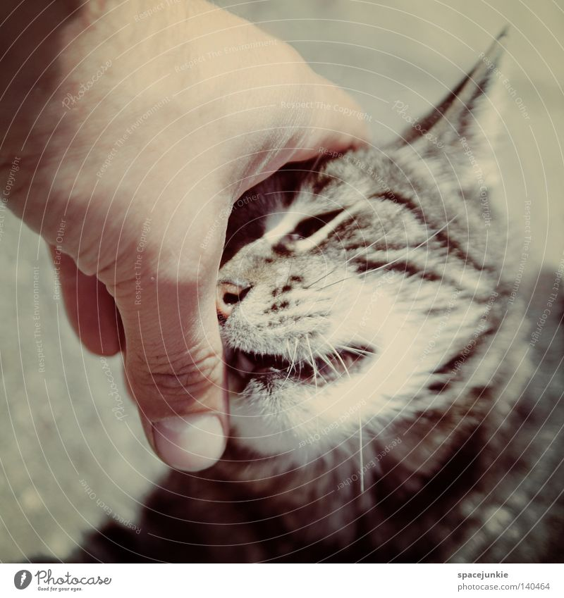 lovely cat Hand Freude Tier Katze Finger Streifen beobachten Fell berühren tierisch Haustier Hauskatze Schnurrhaar